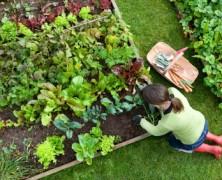 Városi kertészek kerestetnek!