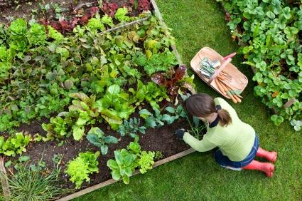 városi kertésznő