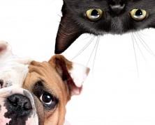Az állatok csodafegyvere a bőrfiatalítás szolgálatában