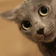 Sztárok a macskákért kampányolnak